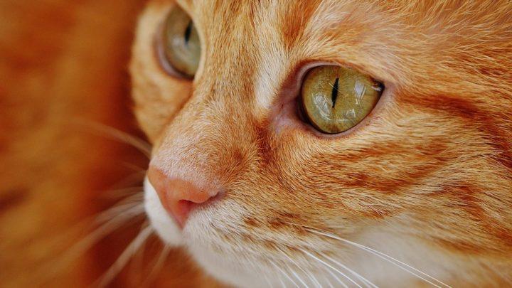 История о том, как кошку в роддом привезли