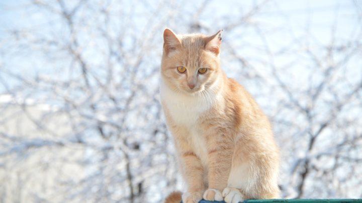 История о том, как мужчина решил проблему с больным котиком