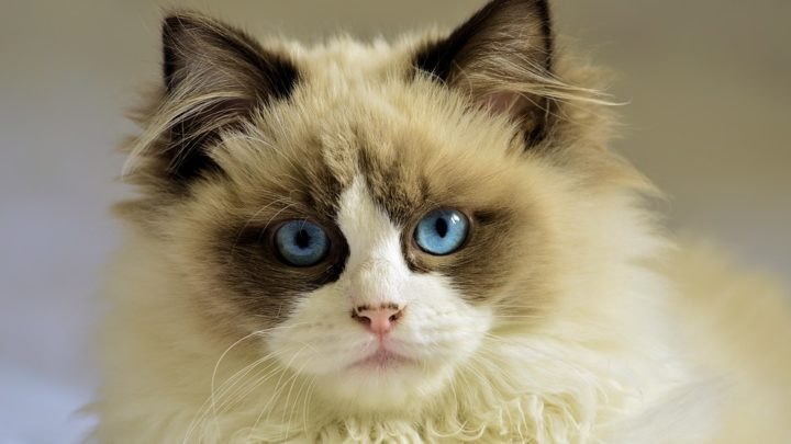 Необычная история одного принципиального кота