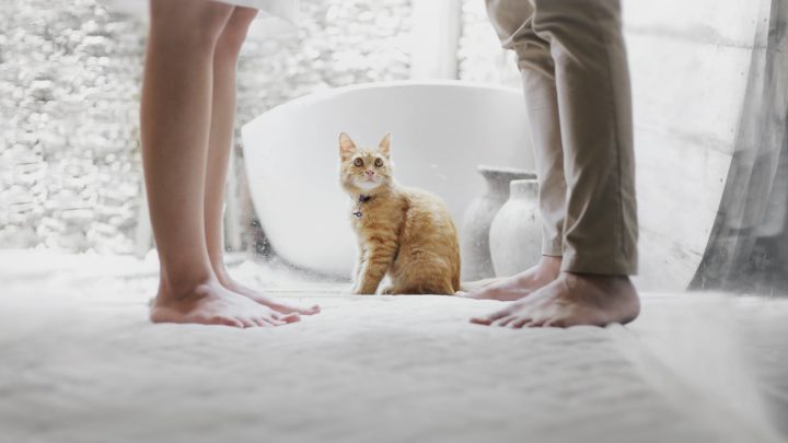 Забавная история про тещу, зятя и кота