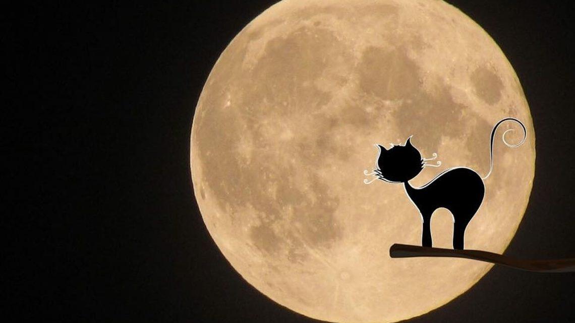 История о кошке, которая от нечисти защищала