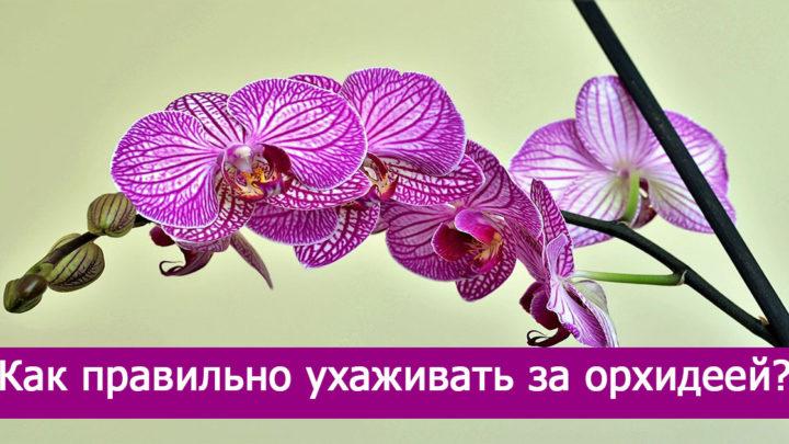 Пособие по уходу за орхидеей