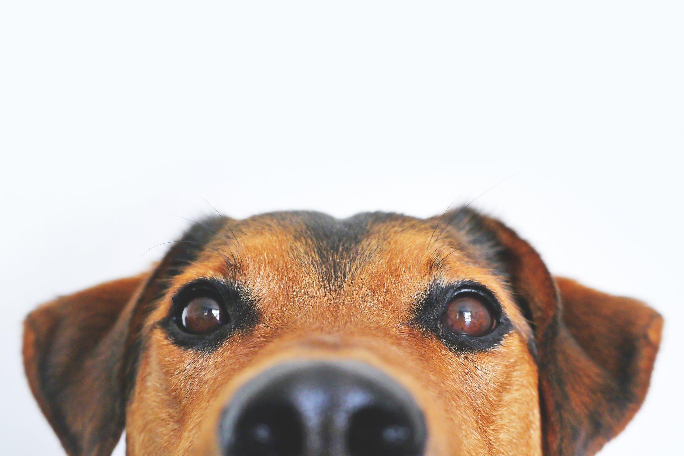 История о любви к собакам
